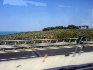 abruzzo-foto-ulivi-mare